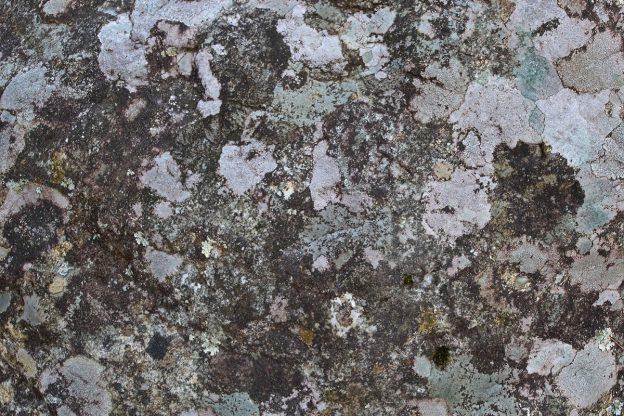 カビた樹皮