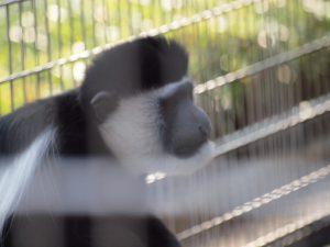 後悔する猿