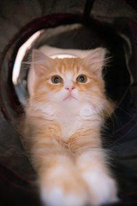 クリッとした目の可愛い猫